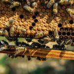 C – 145. Vycházka – včelaření